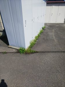 除草剤散布の時期となりました。