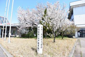 桜の花 見ごろ速報