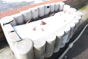 砺波のチューリップ🌷 この時期は雪の下で冷凍保存!!「春を呼ぶチューリップ展」開催中☆彡