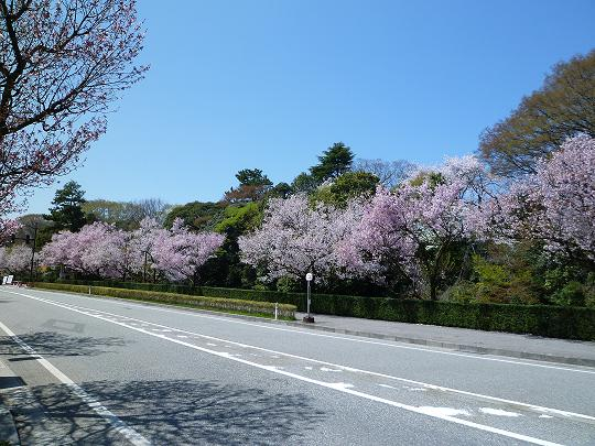 4月18日古城公園桜