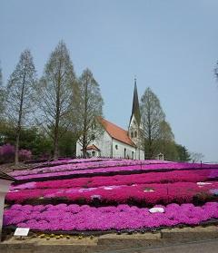 教会と芝桜